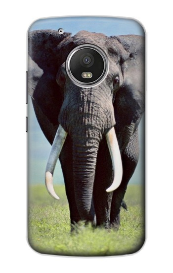 Printed Africa Elephant Apple iPod Touch 5G Case