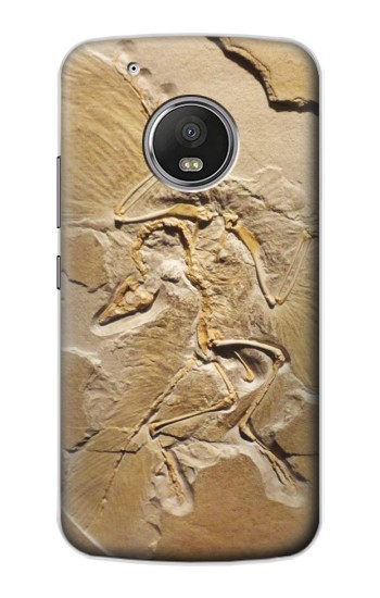 Printed Dinosaur Fossil Apple iPod Touch 5G Case