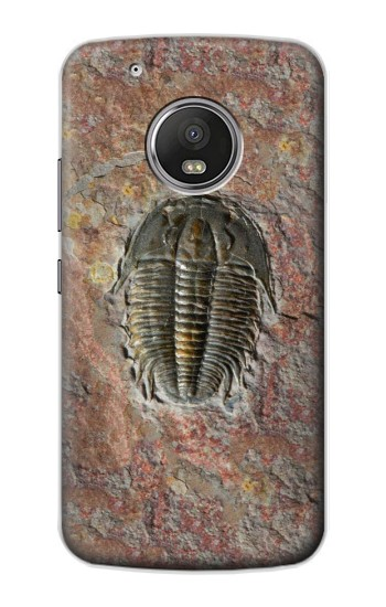 Printed Trilobite Fossil Apple iPod Touch 5G Case