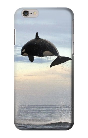 Printed Killer whale Orca Iphone 6 plus Case
