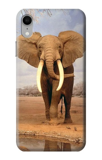 Printed African Elephant iPhone XR Case