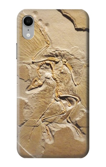 Printed Dinosaur Fossil iPhone XR Case