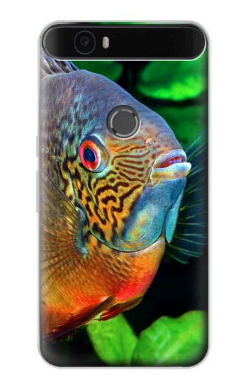 Printed Cichlid Fish Huawei Nexus 6P Case