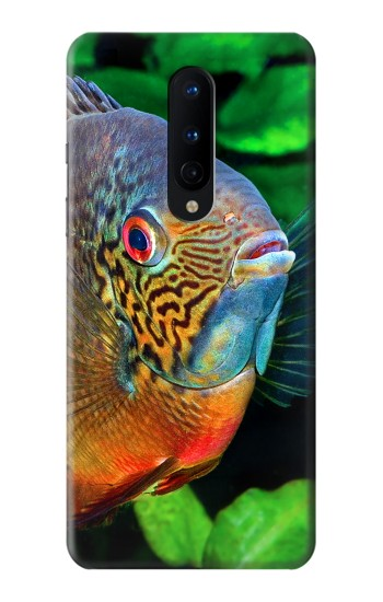 Printed Cichlid Fish OnePlus 8 Case