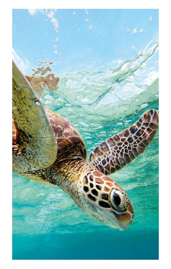 Printed Ocean Sea Turtle iPad Pro 12.9 (2020) Case