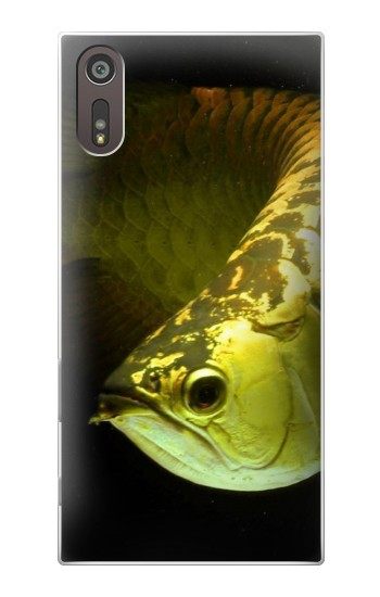Printed Gold Arowana Fish Sony Xperia XZ Case